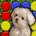 Cute Puppy match 3 game